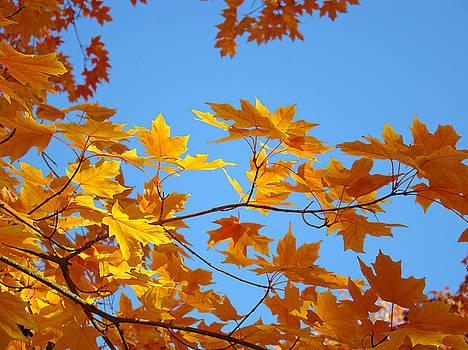 Baslee Troutman - Golden Glowing Yellow Orange Fall Tree Leaves Baslee Troutman
