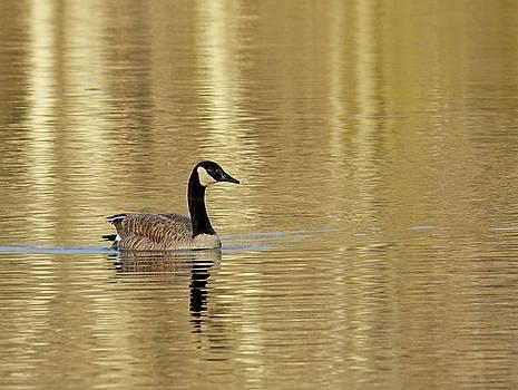 Golden Goose by Lori Pessin Lafargue