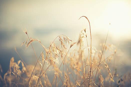 Golden Grassy by Debi Bishop