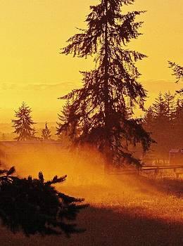 Golden Haze at Sunrise by David Frankel