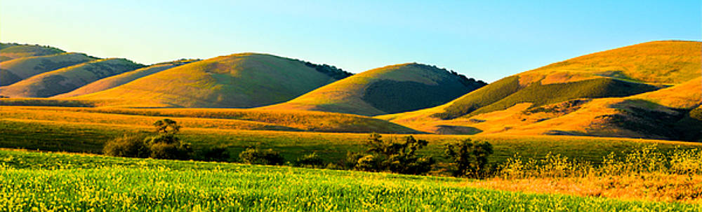 Golden Hills of Wine Country by Bill Rumbler