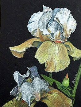 Golden Iris by Sue Henson