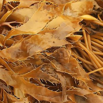 Art Block Collections - Golden Kelp