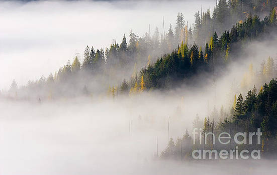 Golden Larch Morning by Mike Dawson