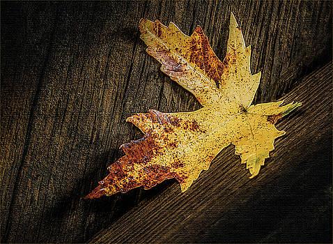 Golden Leaf by David Johnson