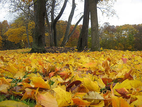Golden Leaves by Michael McFerrin