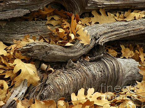 Golden Leaves by Robert Ball