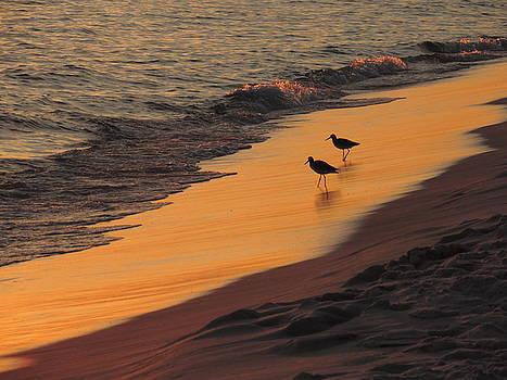 Golden Light at Sunset by Teresa Schomig