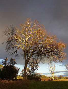 Golden Light by Jerry LoFaro