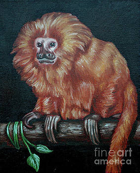 Golden Lion Tamarin by Rebecca Tiano