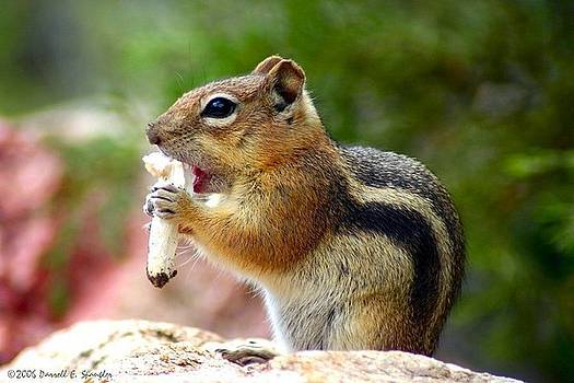 Golden-mantled Ground Squirrel by Perspective Imagery