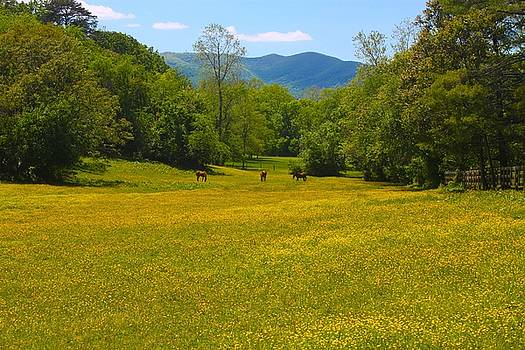 Golden Meadow by Carol Turner