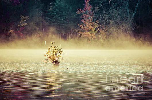 Golden Mist on Waples Pond Landscape Photo by Melissa Fague