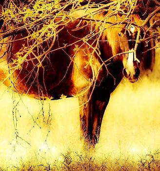 Golden Moment by Jill Moran