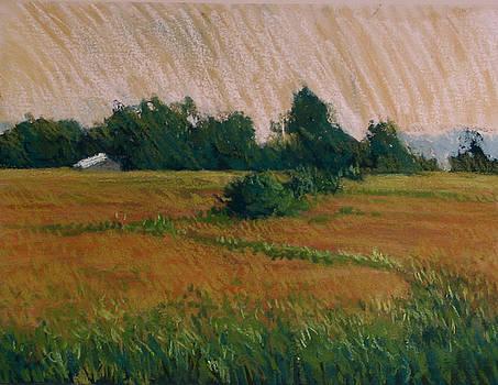 Golden Morning by Jan Frazier