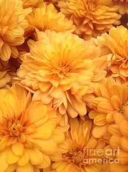 Golden Mums by Iris Newman