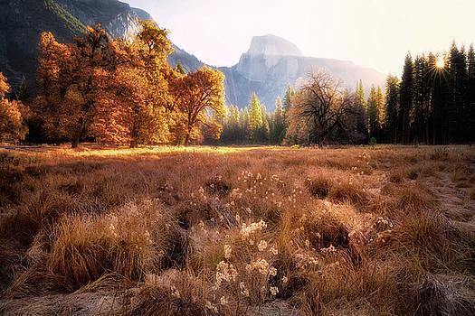 Golden Oaks by Nicki Frates