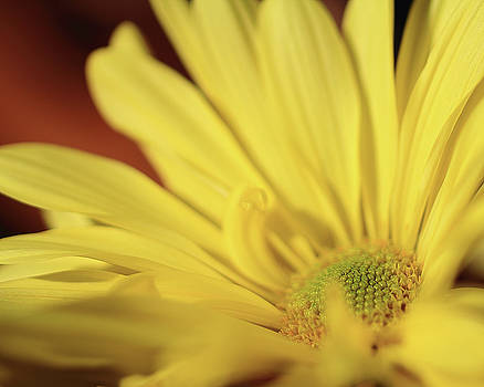 Golden Petals by Brian Pflanz