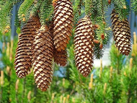 Baslee Troutman - Golden Pine Cones art prints Pine Trees Baslee Troutman