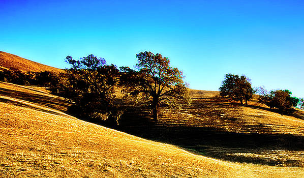 Golden Plains Central California by Joseph Hollingsworth