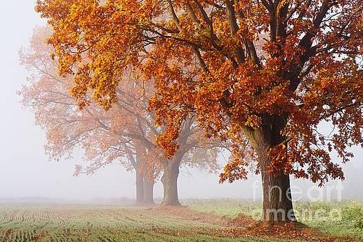 Golden Polish Autumn by Jaroslaw Suchozebrski