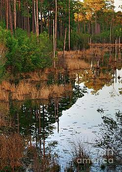 Golden Pond by Lori Mellen-Pagliaro