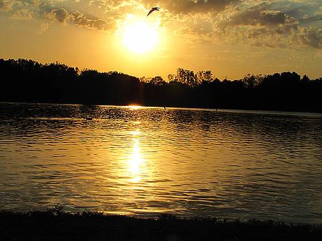 Scott Hovind - Golden pond