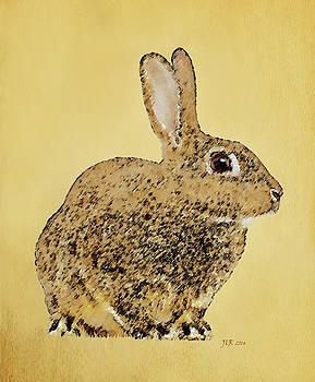 Bamalam  Photography - Golden Rabbit
