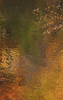 Golden Reflections by Catherine Alfidi