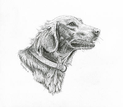 Golden Retriever by Timothy Livingston