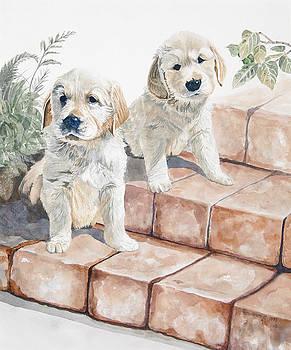 Golden Retrievers by Ann Arensmeyer