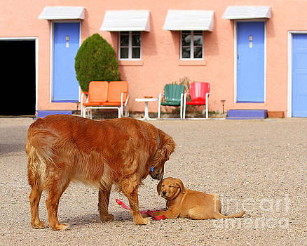 Golden Retrievers at the Blue Swallow Motel by Catherine Sherman