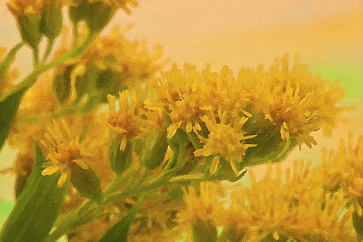 Sandra Foster - Golden Rod Solidago