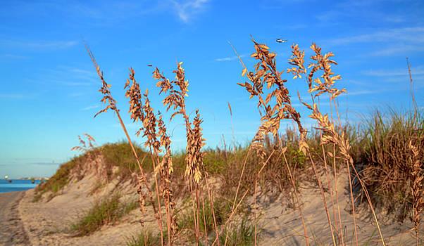 Golden Sea Oats by Betsy Knapp