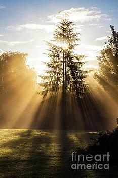 Golden shafts of light. by Andy Bradley