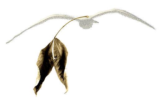 Golden silhouette of a seagull by Fernando Cruz