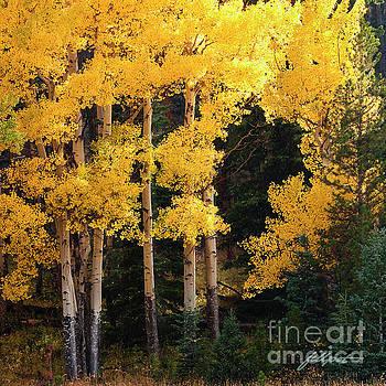 Golden Sun by Jim Fillpot