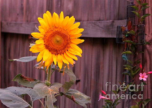 Golden Sunflower by Sheri LaBarr