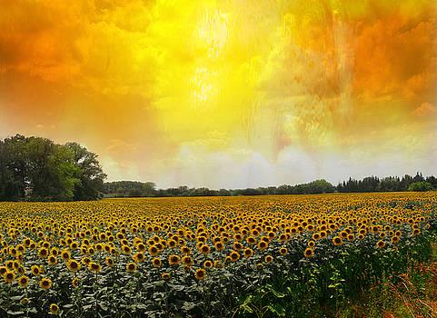 Golden Sunflowers of Nimes by Melvin Kearney
