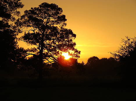 Golden Sunrise by Ramona Barnhill