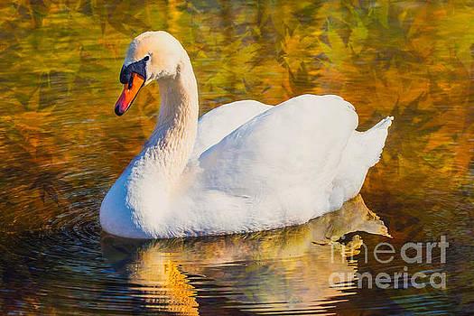 Golden Swan by Geraldine DeBoer