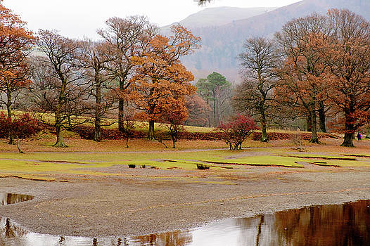 Golden Trees by David Ridley