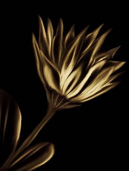 Golden Water Lily by Michele Koutris