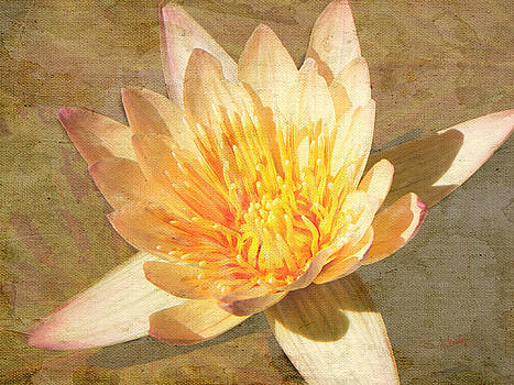 Golden Water Lily by Rosalie Scanlon