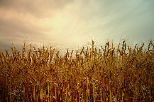 Kae Cheatham - Golden Wheat