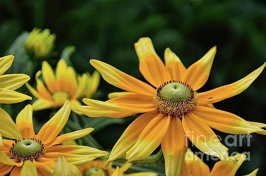 Golden Yellow by Diana Mary Sharpton