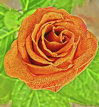 Goldenrod Rose by Cheryl Ehlers