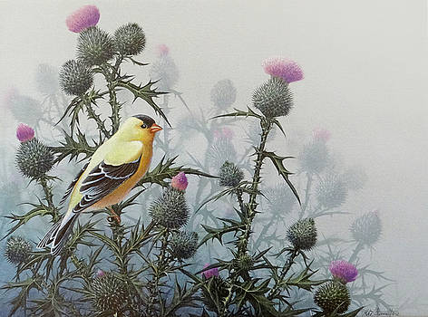 Goldfinch and Thistles by Mike Stinnett
