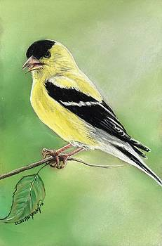 Goldfinch by Charlotte Yealey