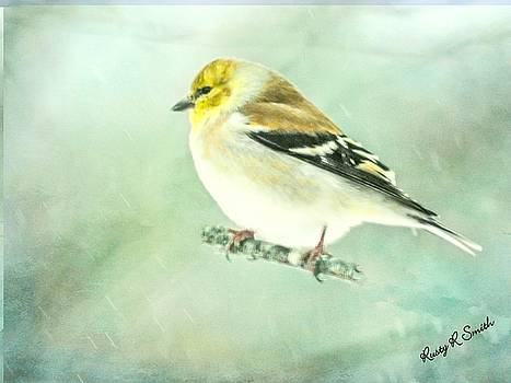 Goldfinch in falling snow. by Rusty R Smith